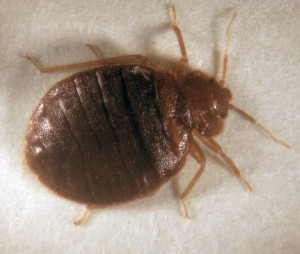 hacienda bed bug control